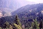 Δάσος Σιαμαντά