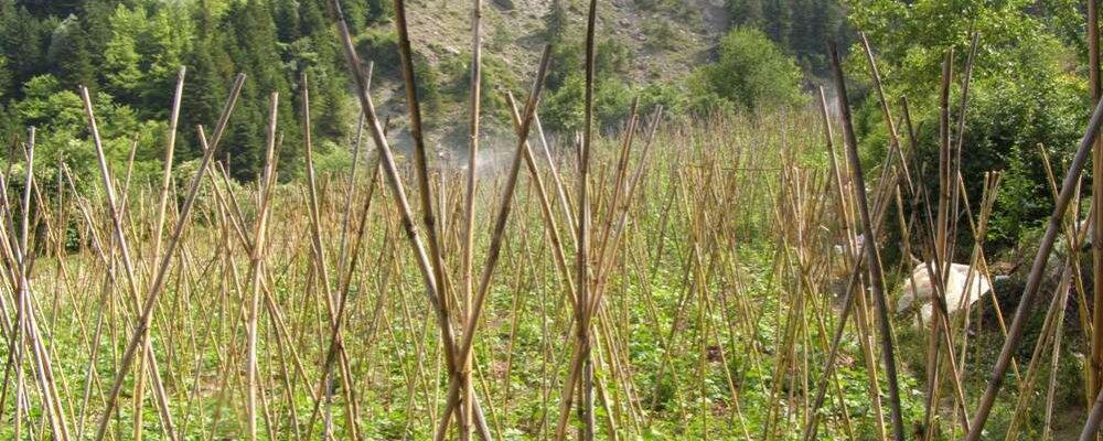 Ορεινές παραδοσιακές καλλιέργειες στα Θεοδώριανα.